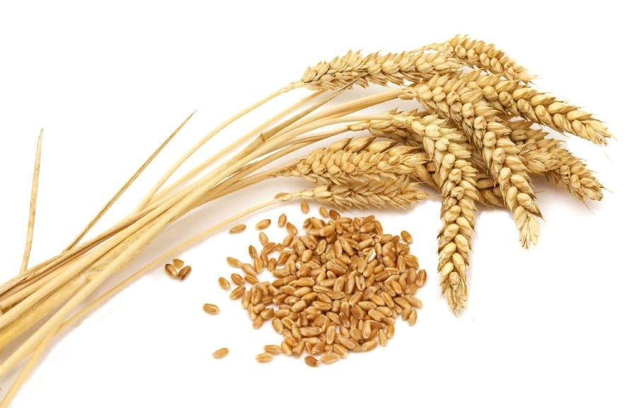 бездрожжевая брага на пшенице