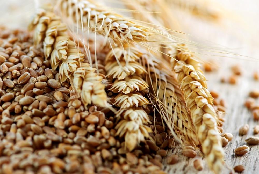 Зерновая брага на диких дрожжах