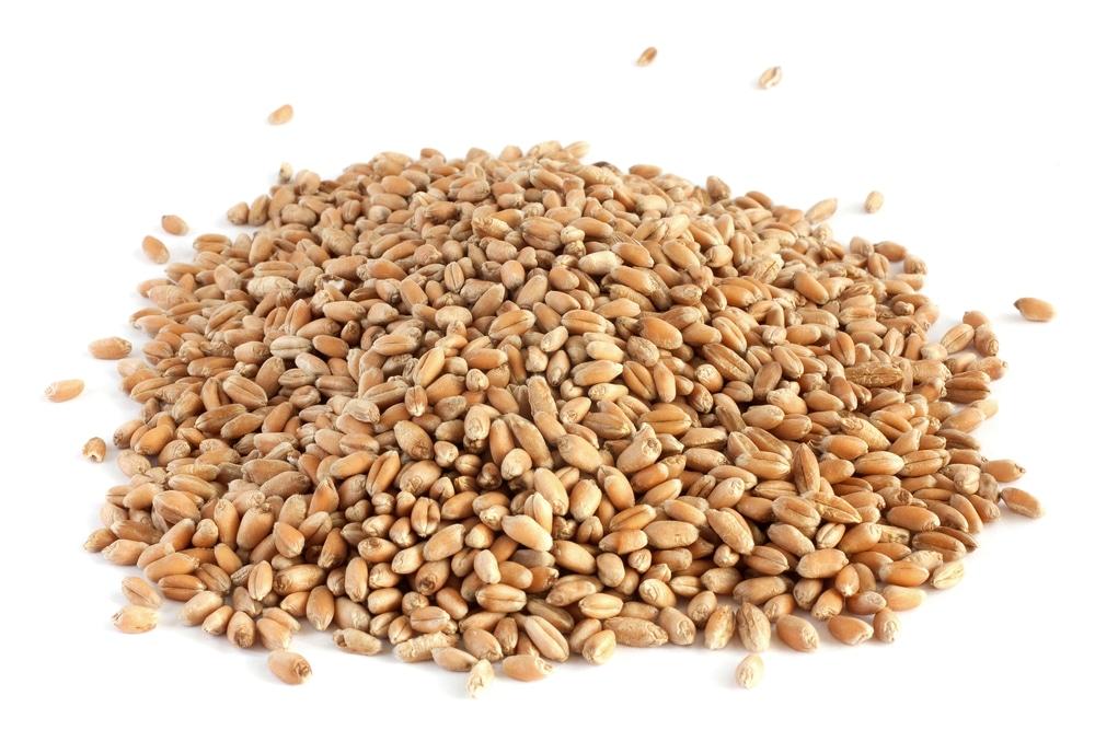 Брага на проросшей пшенице
